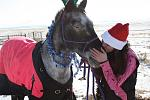 My christmas picture with my horse Echo