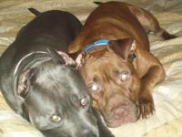 This group is setup for people who support Pit Bulls. If you fight dogs then this IS NOT FOR YOU! If you love the breed and are a responsible pit bull owner then lets join together and...